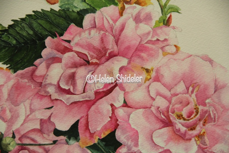 "WIP Helen Shideler ""A Rose is a Rose'"