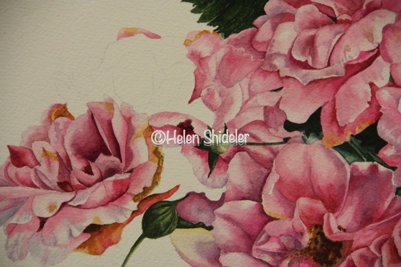"WIP Helen Shideler ""A Rose is a Rose"""