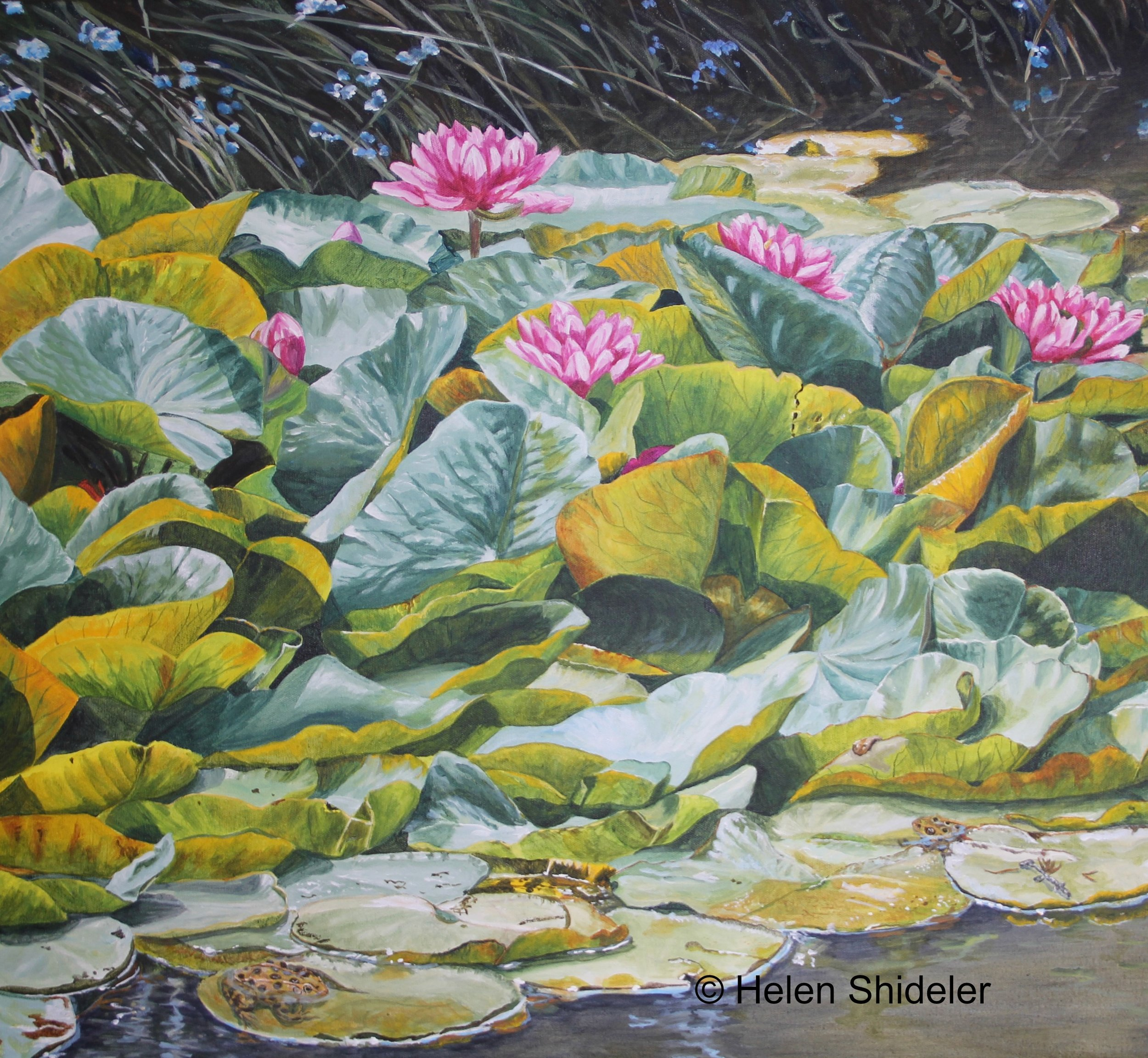 Pond in mid-summer by Helen Shideler