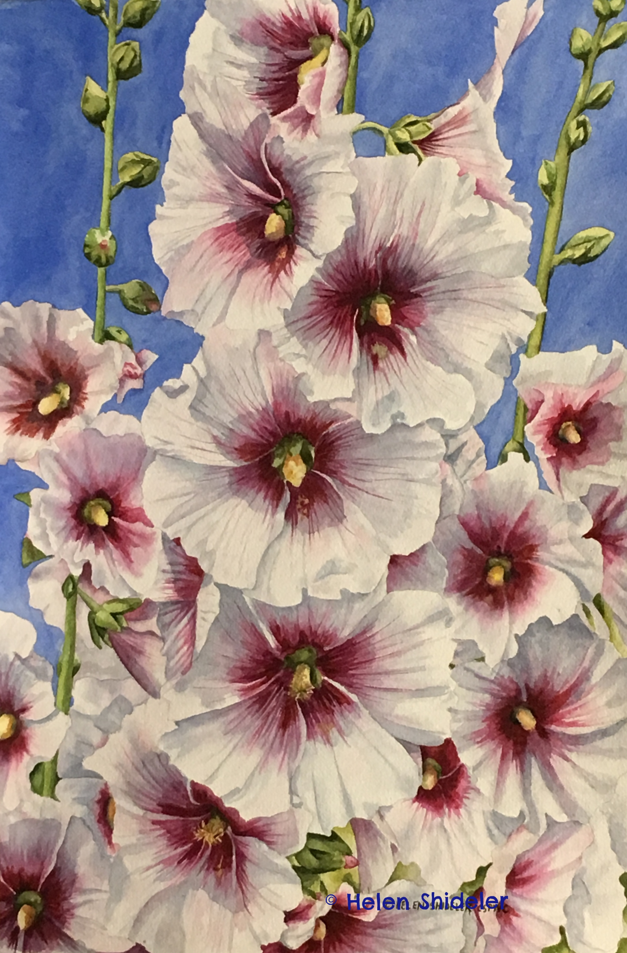Country Garden Favourite hollyhock painting by Helen Shideler