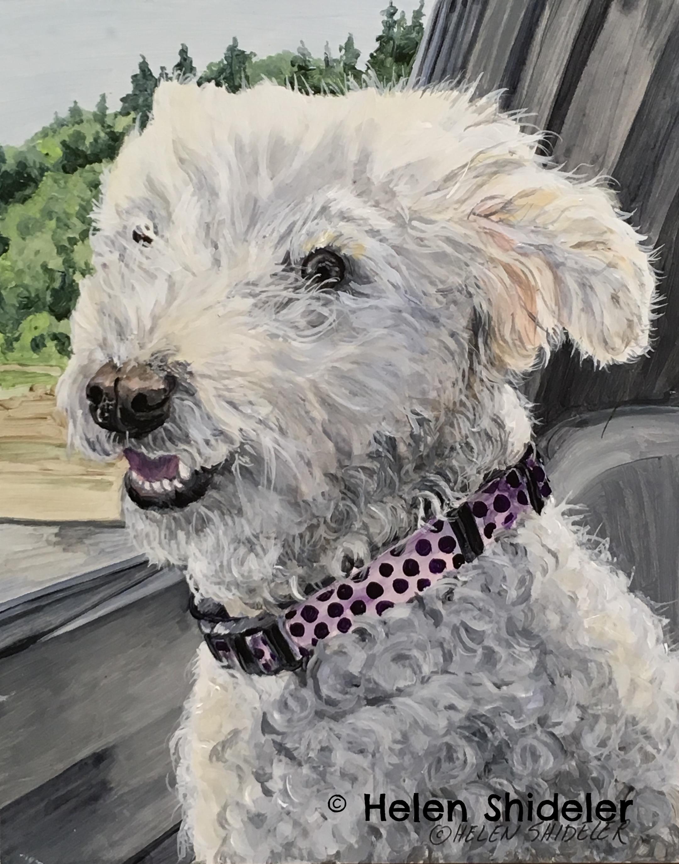 Callie by Helen Shideler