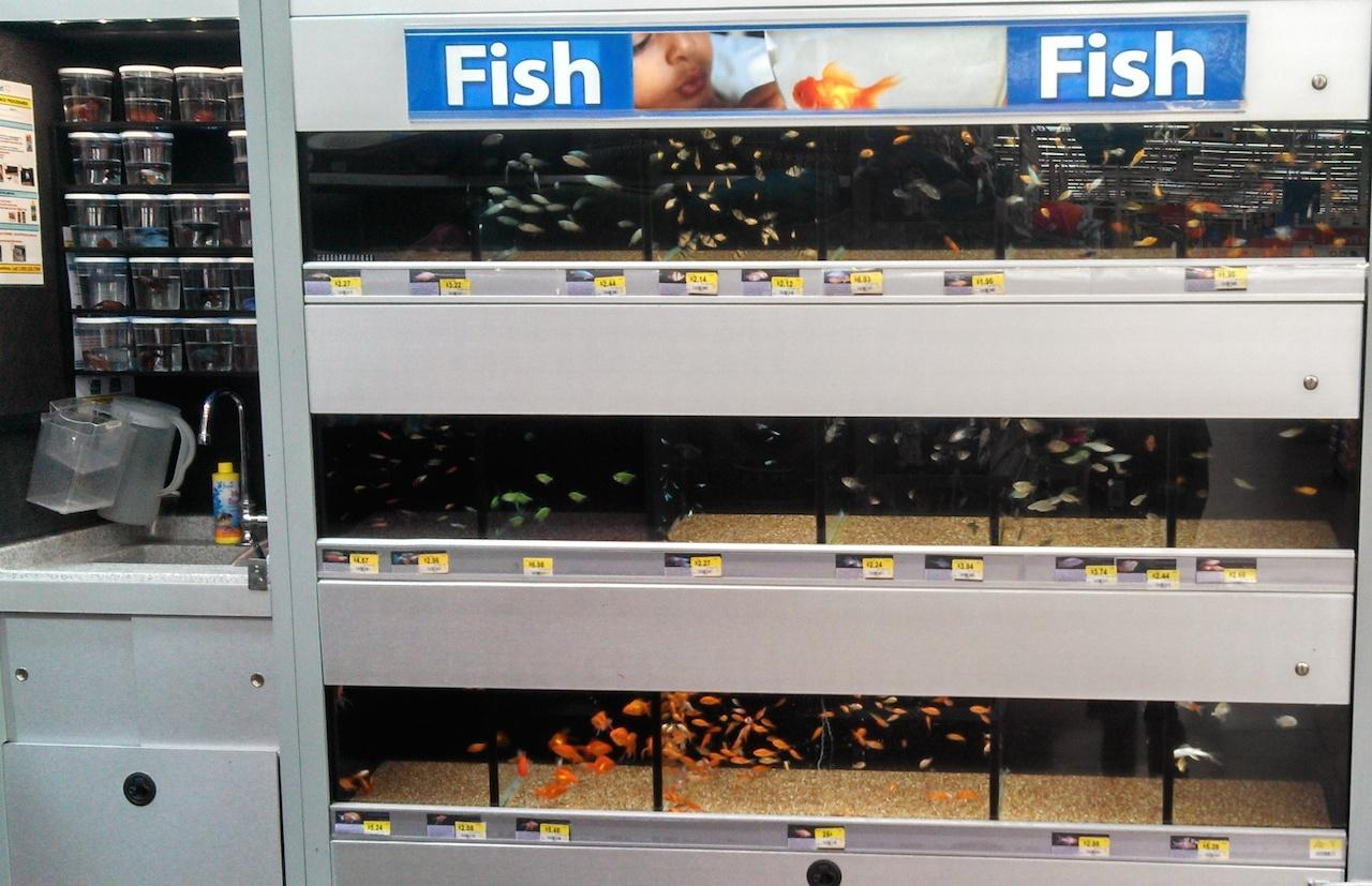 What if I could remotely track live fish inventory automatically?
