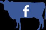facebook cow