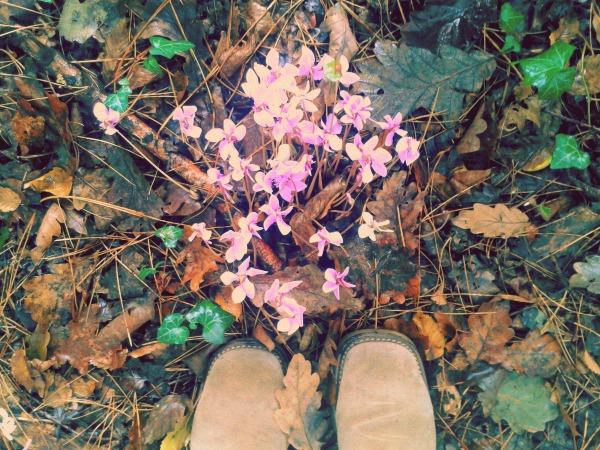cyclamens feet