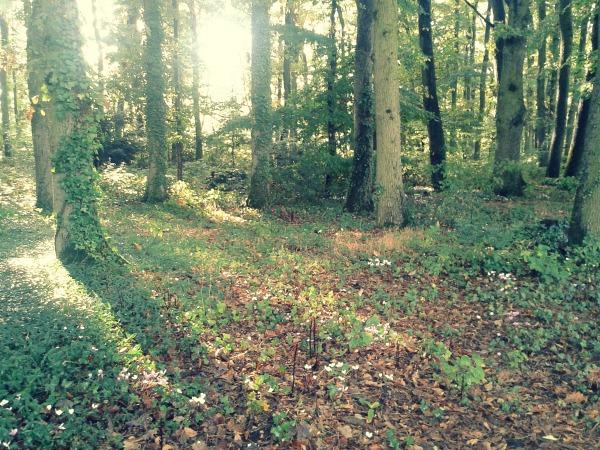 wood autumn
