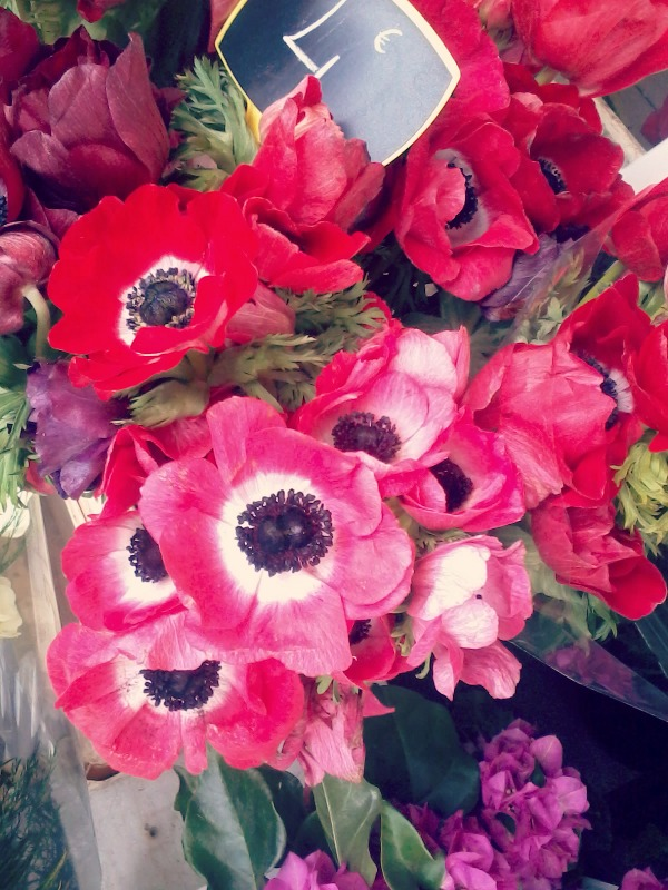 anemones W