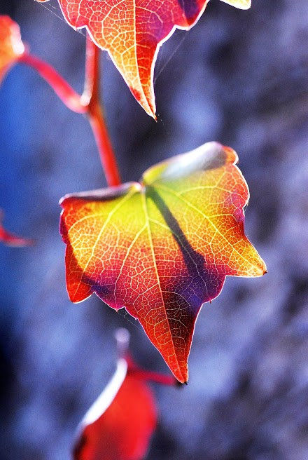 bright leaves row.jpg
