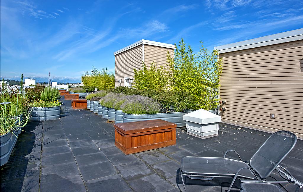 roof top 2.jpg