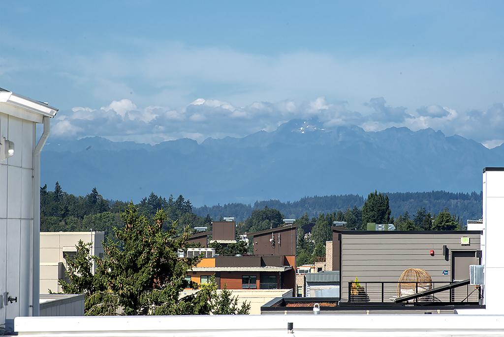 roof top view 2.jpg