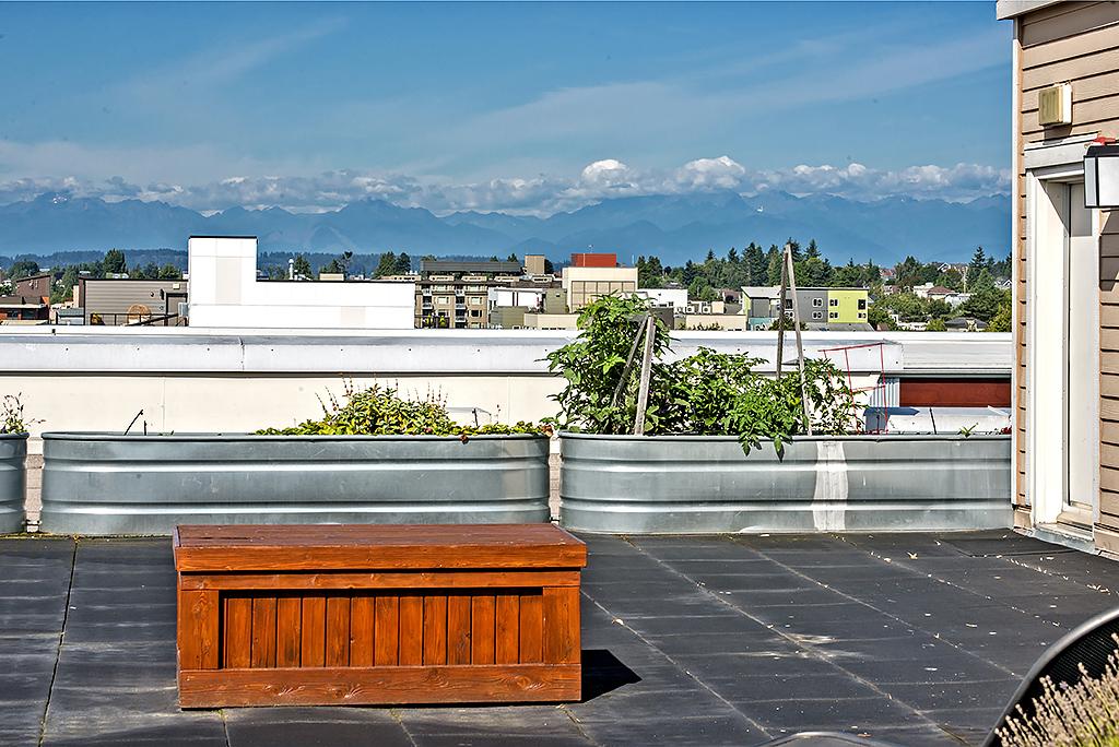 roof top view 3.jpg