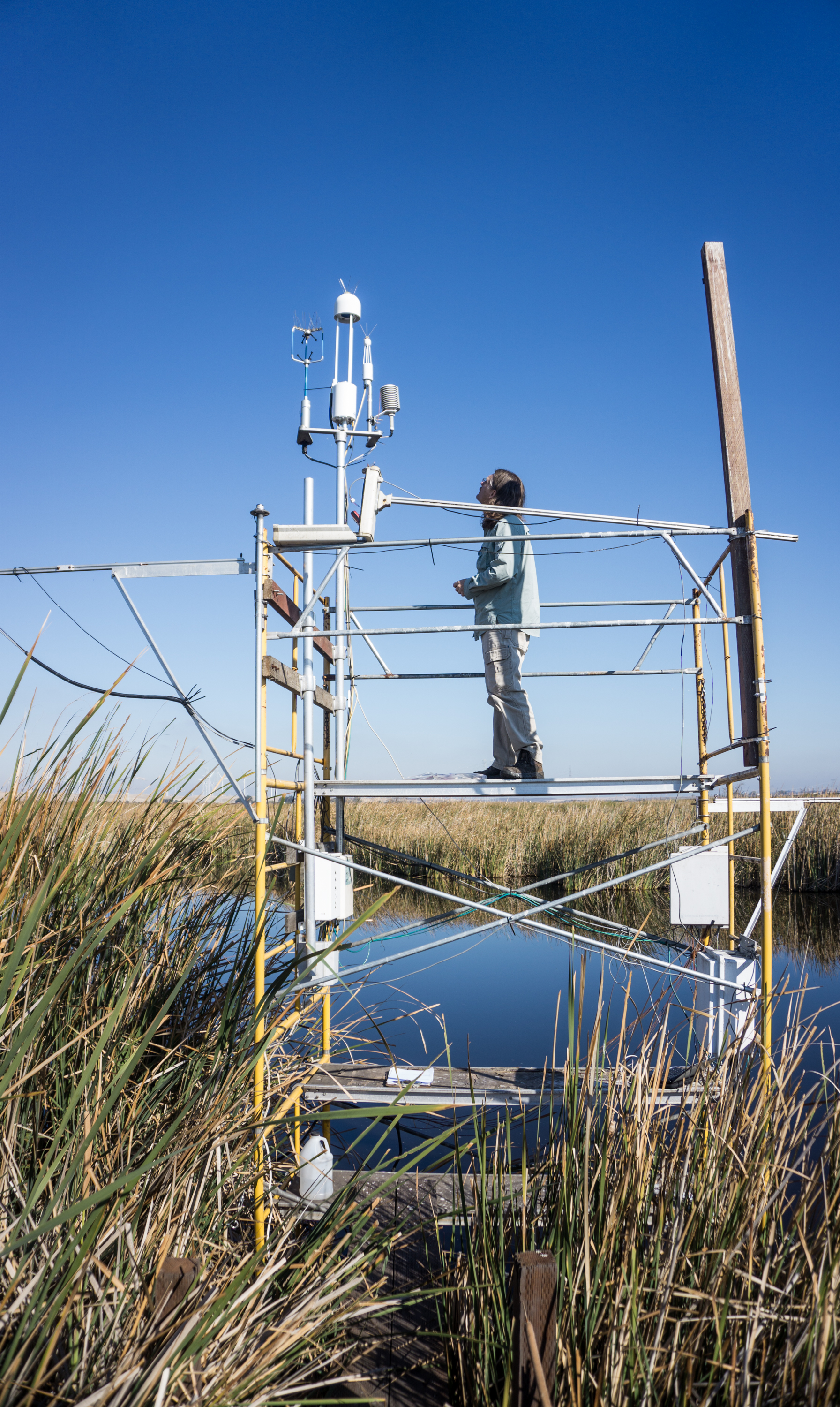 An eddy covariance tower in the Sacramento San Joaquin Delta continuously measures the exchange of greenhouse gases, energy, and water to understand the climatic benefit of these restored, managed wetlands. Photo: Kyle Hemes