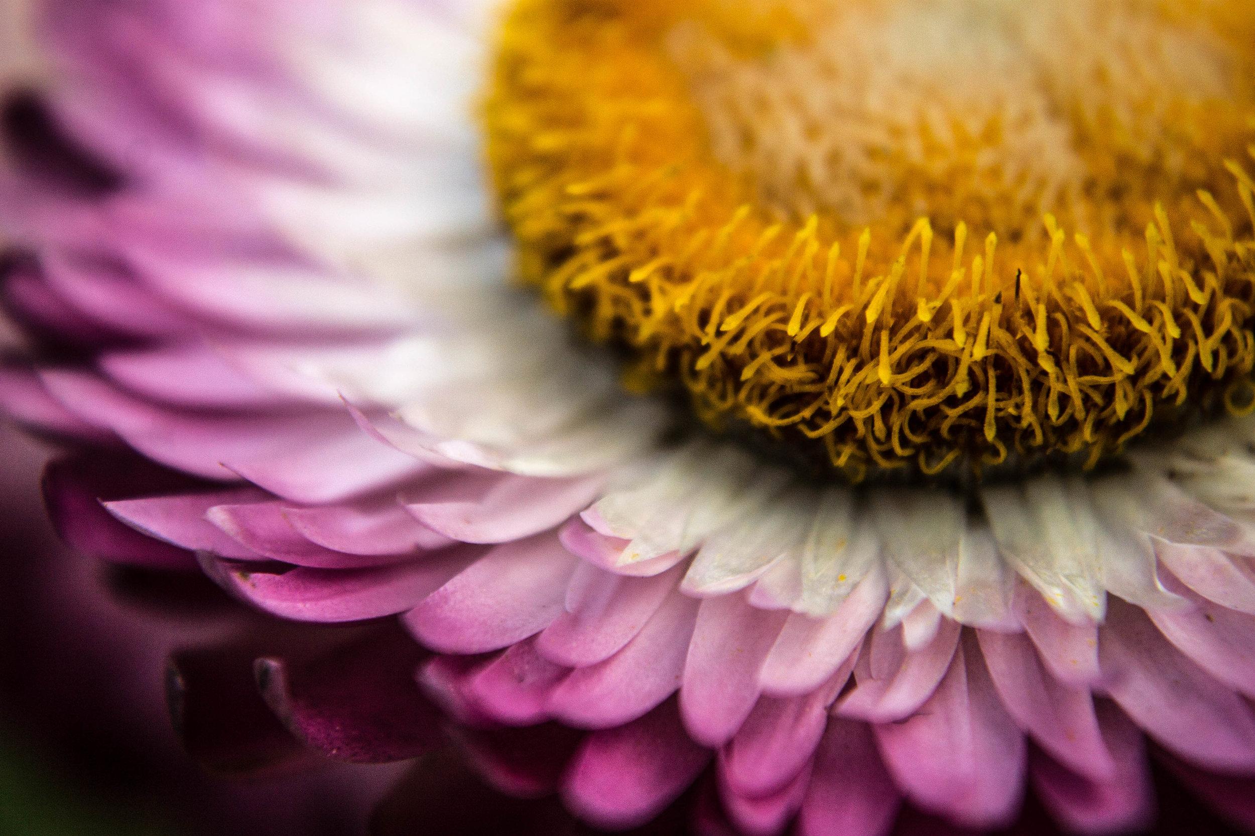 Burrell_Photography_8.jpg