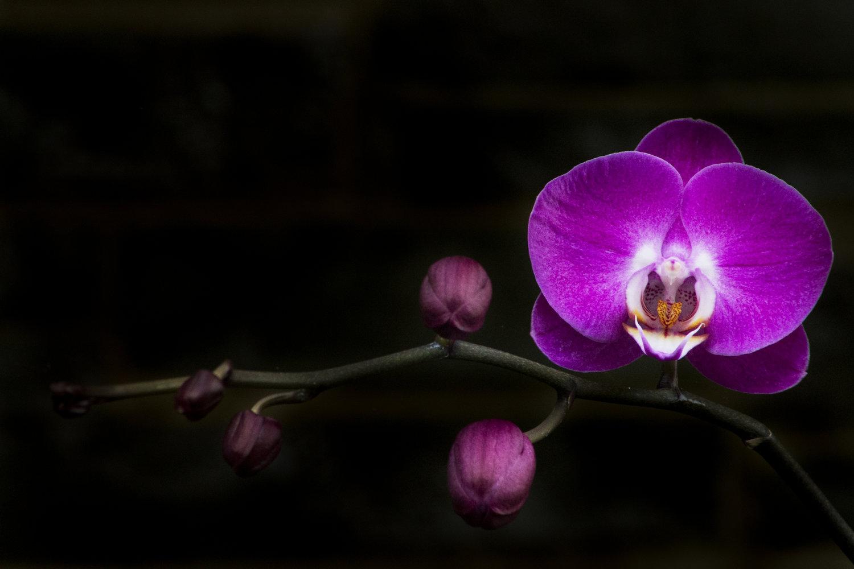 Burrell_Photography_Flower_2.jpg