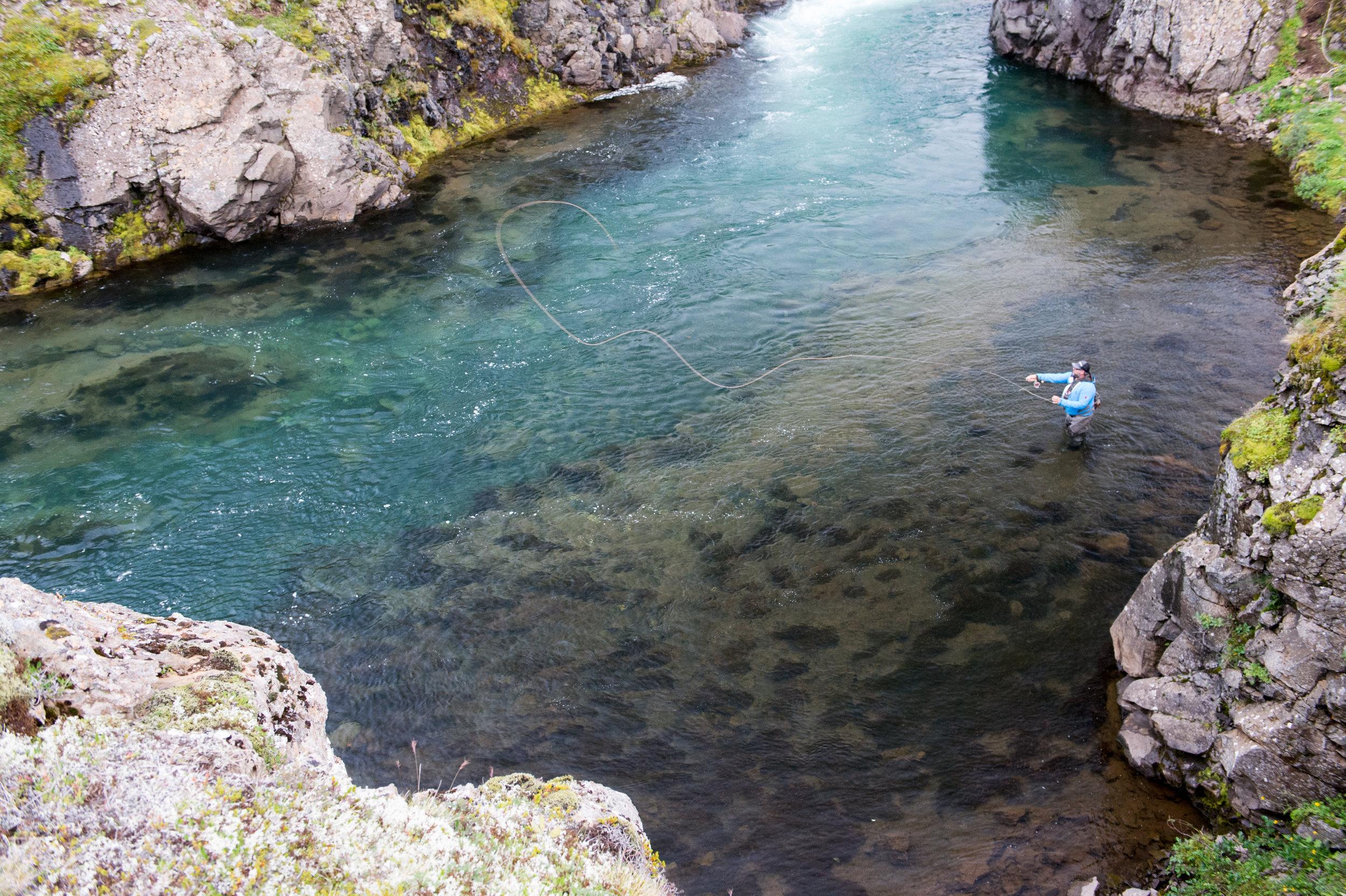 Iceland_Fish_2.jpg
