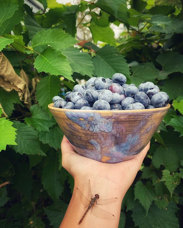Does this dragon fly spontaneously landing on my arm make this Insta food photo more basic or less basic?🤓 . Either way, I love these colors and wanted to share💙Juicy berries brought to you by #Vermont, hand crafted bowl by @ryegypsea who's been making my kitchen better all summer😘