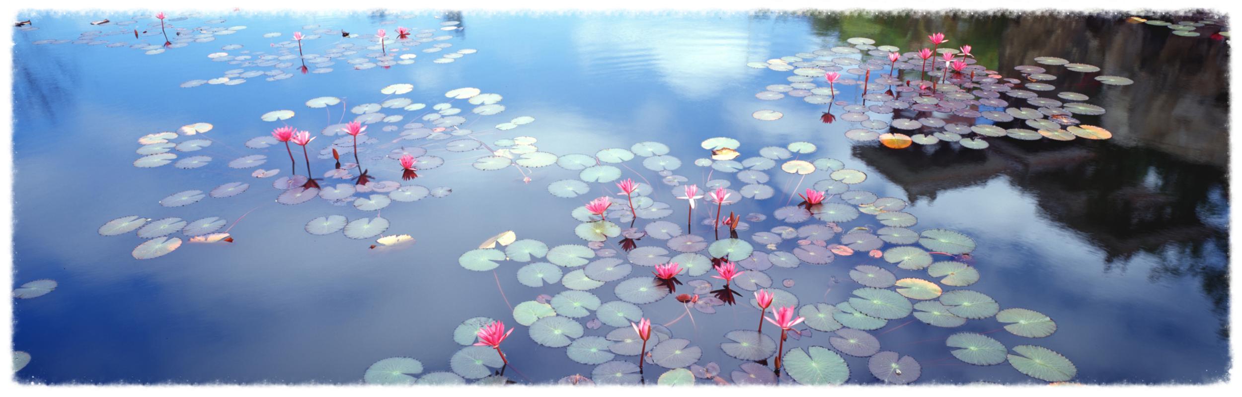 """"""" No Mud, No Lotus"""" ~ Thich Nhat Hanh"""