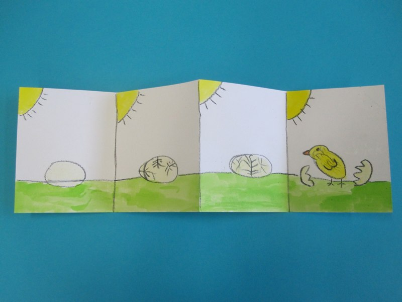 Baby Chick Hatching Story