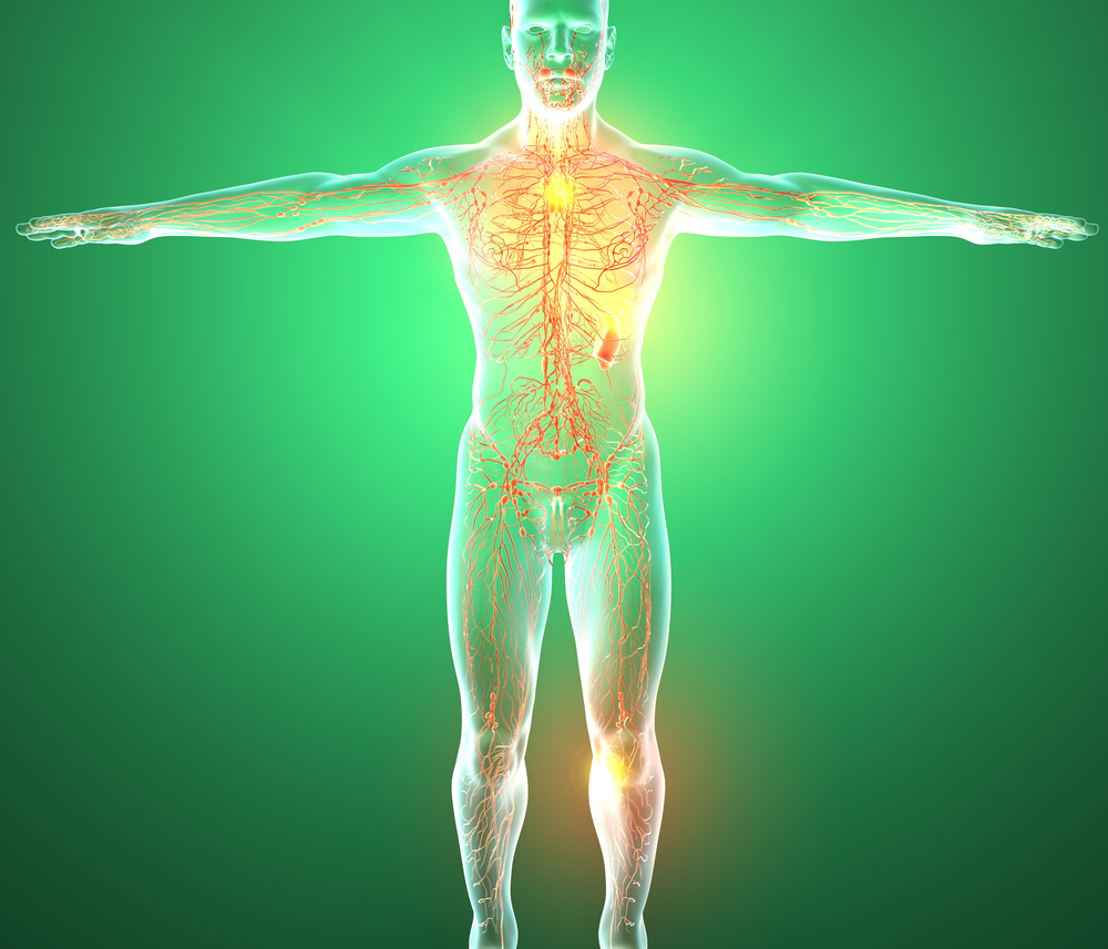 The human lymphatic system exists throughout the body.