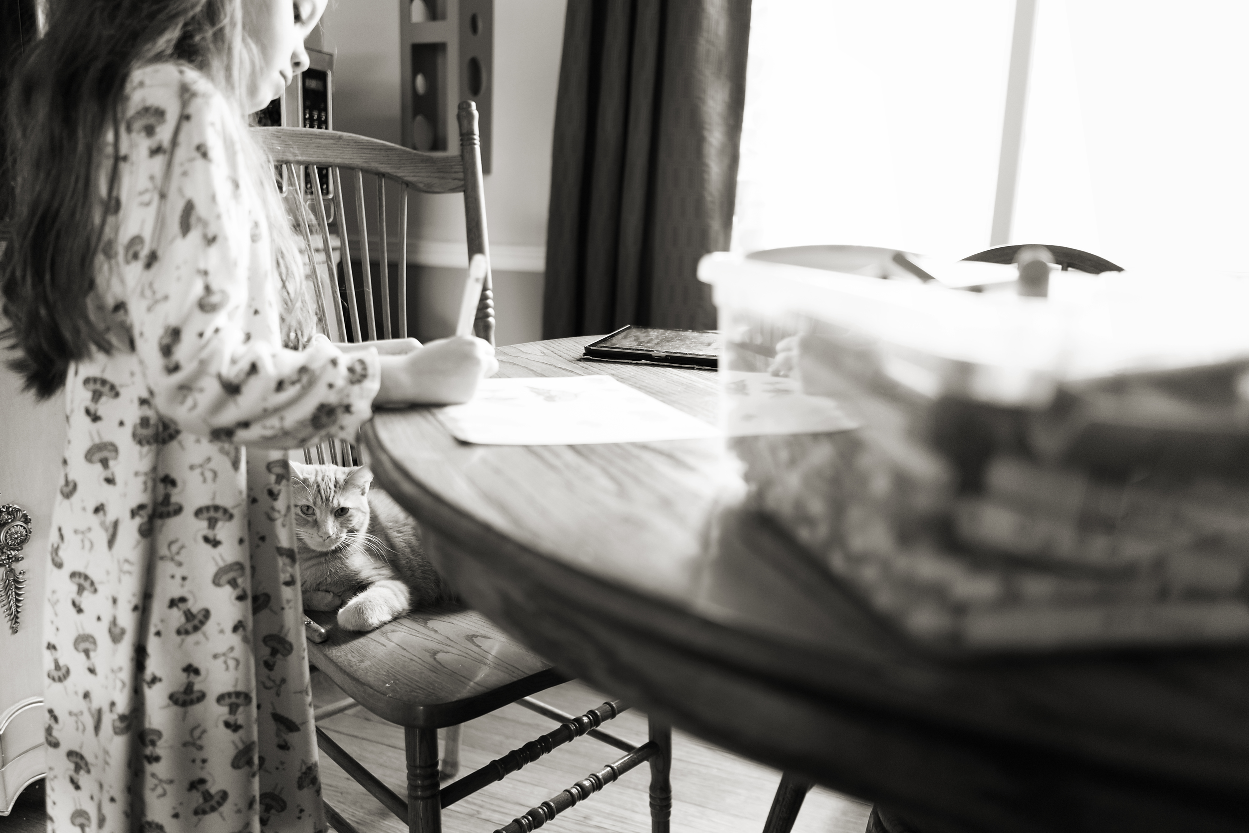 Columbus photographer captures child and cat making colored pictures in vintage home in Worthington.