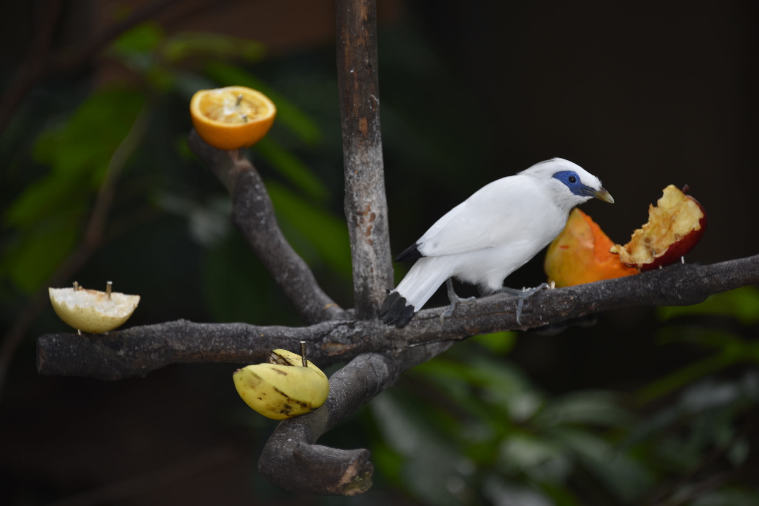 A bird nibbles on some treats in Hong Kong Park aviary.
