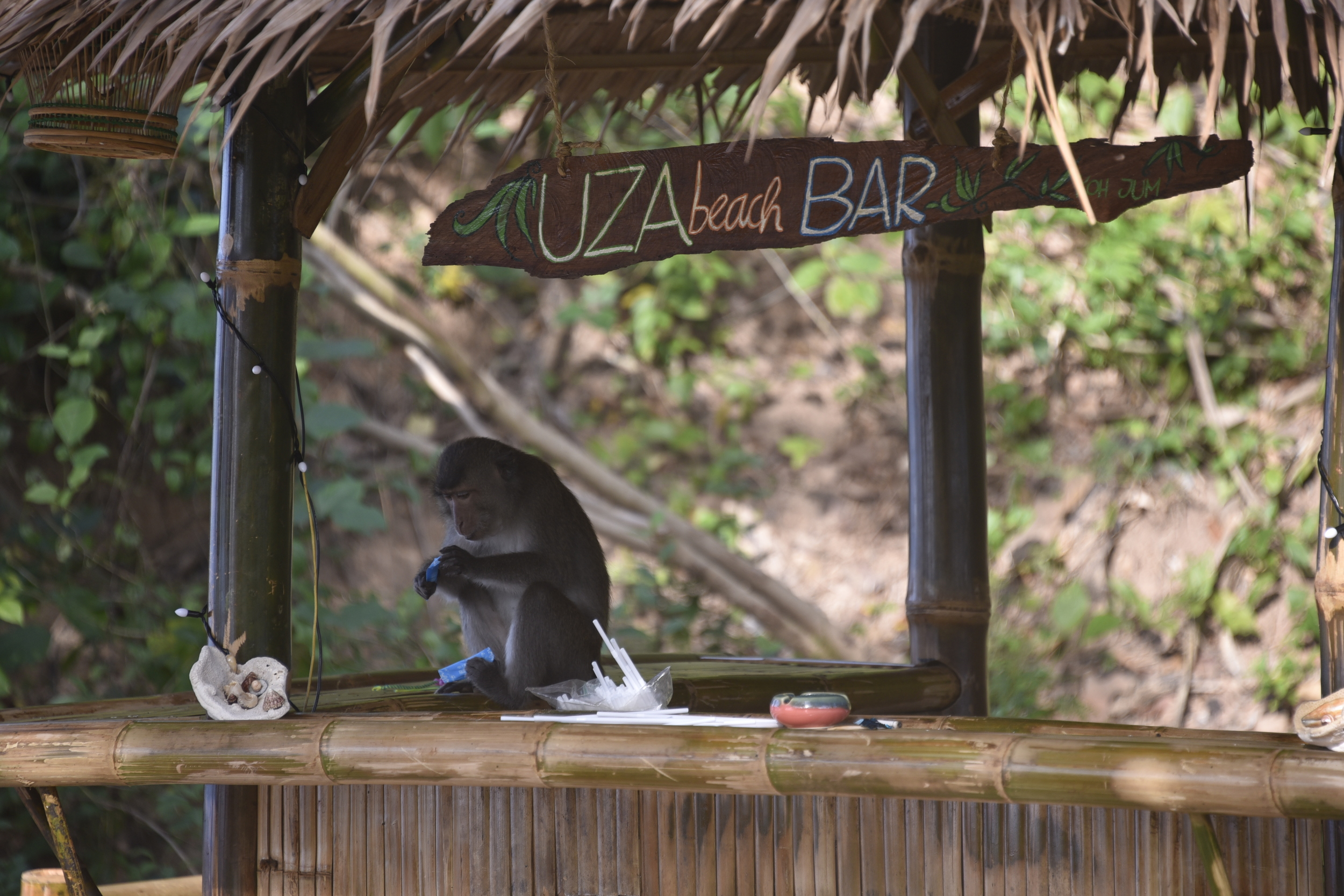 One of the monkeys decides to try bartending.