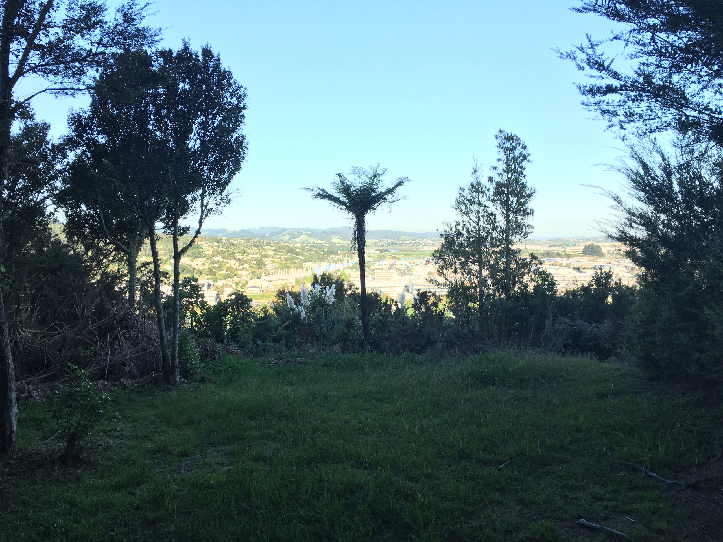"I explored the hills above town, hiking a trail near Whangarei Quarry Gardens.  This is the view from the historic ""Pa"" or Maori fortification site.  If you look closely, you can see the masts of sailboats in the marina just to the left of palm in center of picture."