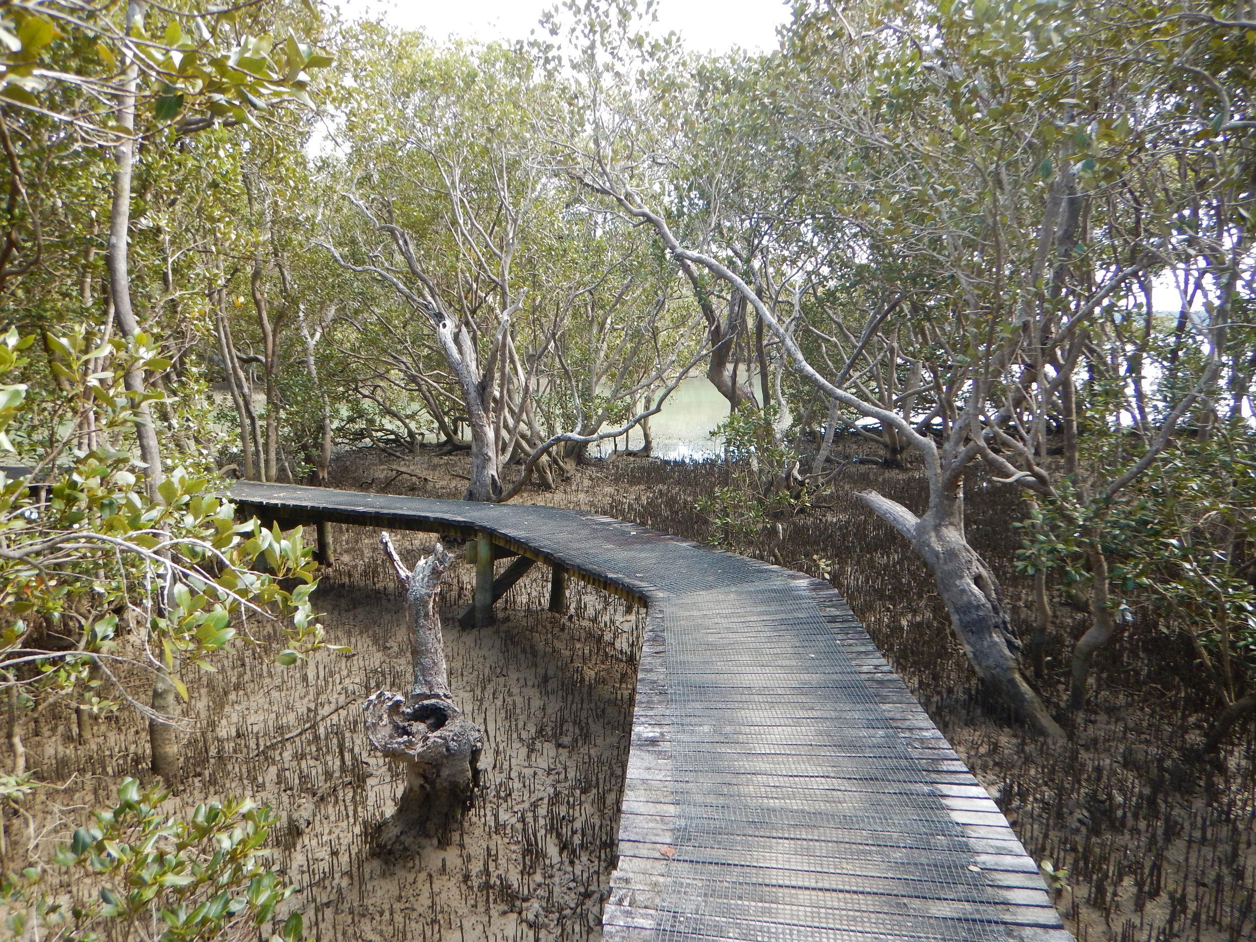 Boardwalk through the mangroves.