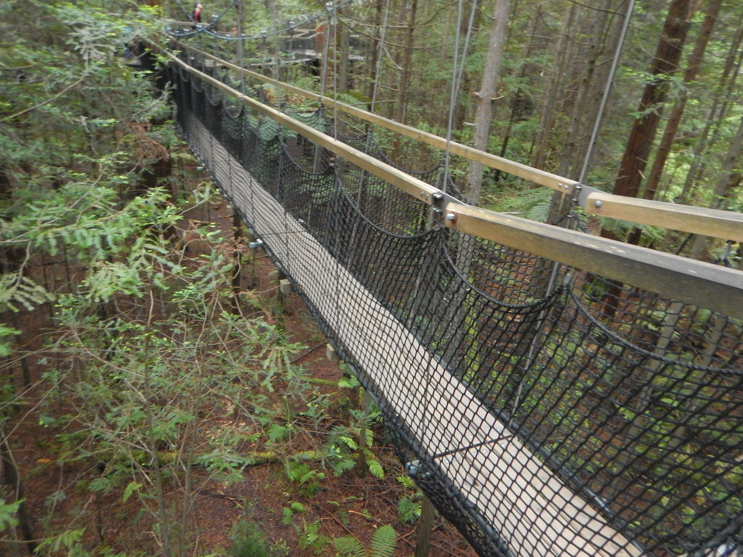 redwoods treewalk.