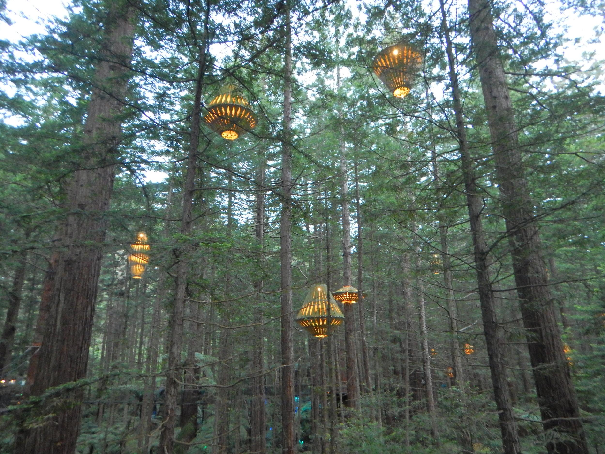 lanterns on the redwoods treewalk.