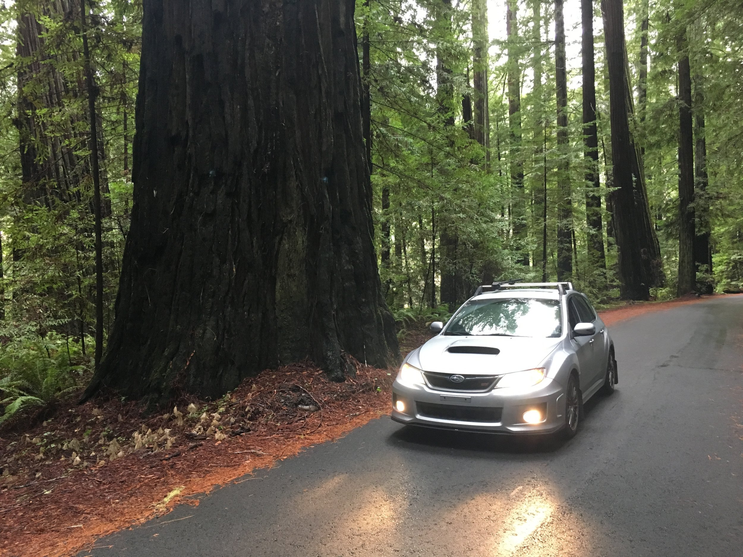"driving through the redwood forests! look at the size of that tree vs. my car! (this photo was taken along a small road that is an offshoot from ""avenue of the giants,"" which itself is a 31-mile scenic route paralleling highway 101.)"