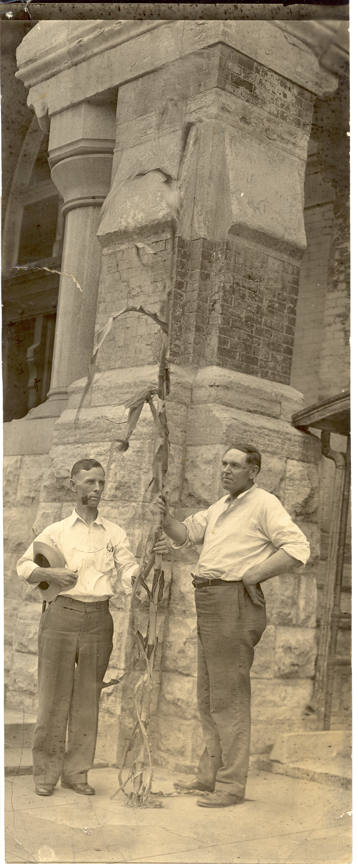 Undated photo with an unidentified man and some tall corn