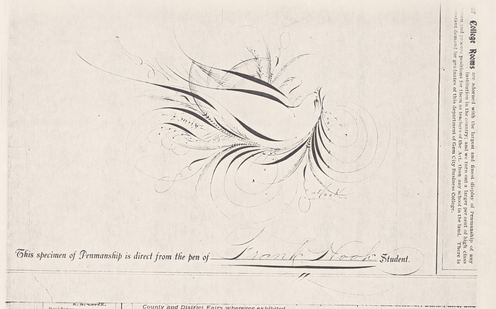 Bird-with-Scroll---Emily-2_WEB.jpg