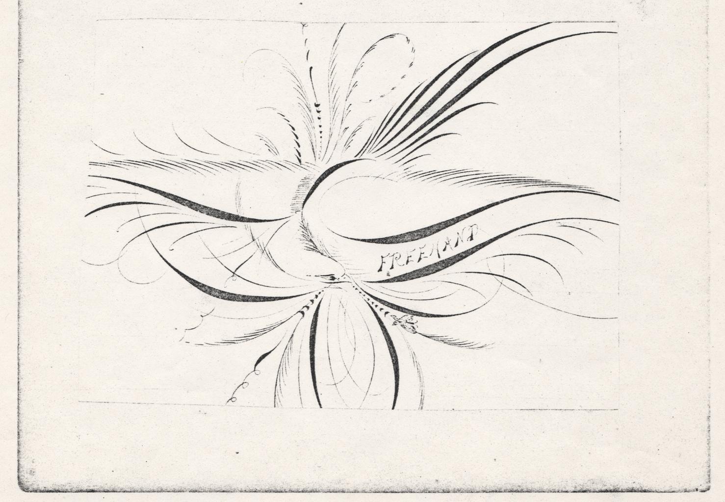 Bird-with-Scroll---Freehand_WEB.jpg