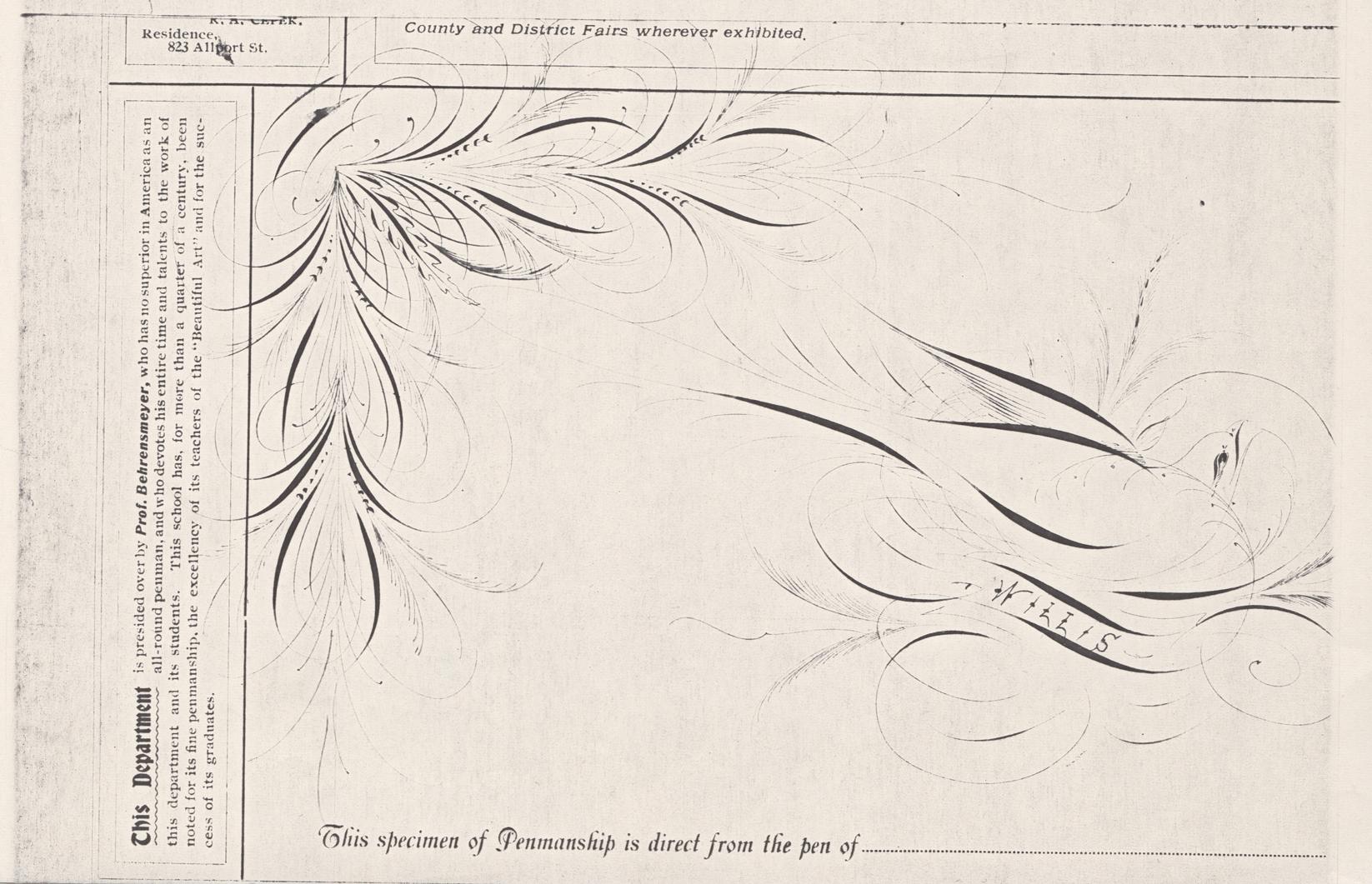 Bird-with-Scroll---Willis-2_WEB.jpg