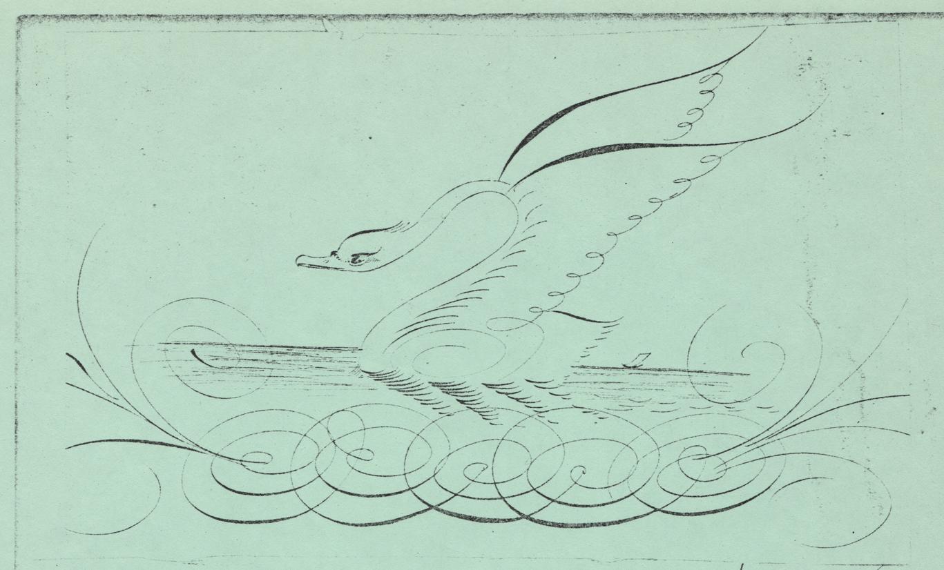 Swan-3_WEB.jpg