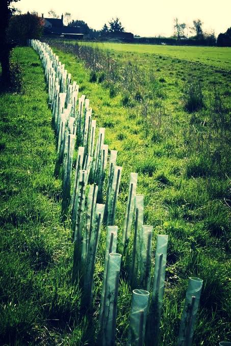 hedging.jpg