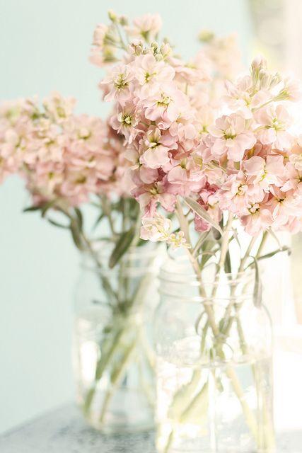 flowers - PInterest from flickr.jpg