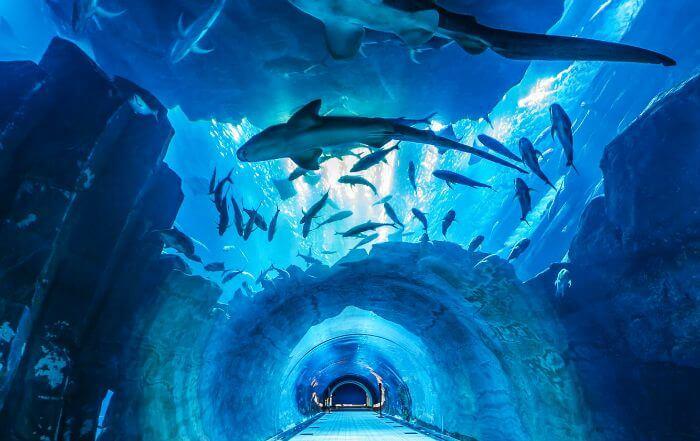 Underground-Dubai-Aquarium.jpg