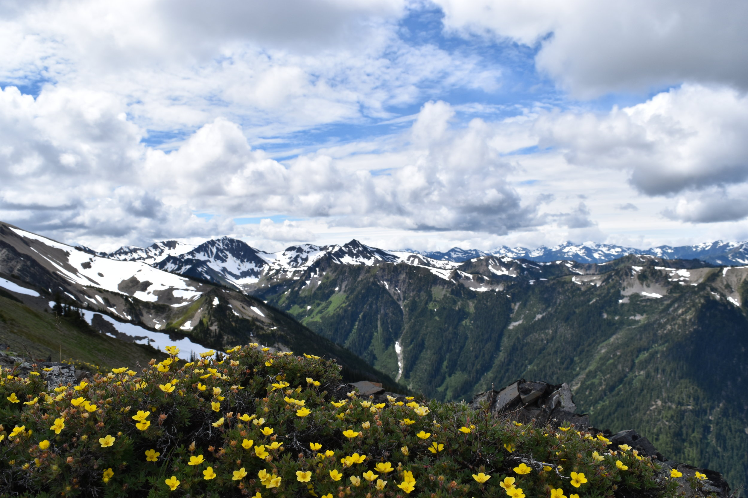 Hurricane Ridge. Olympic National Park. (also known as heaven).