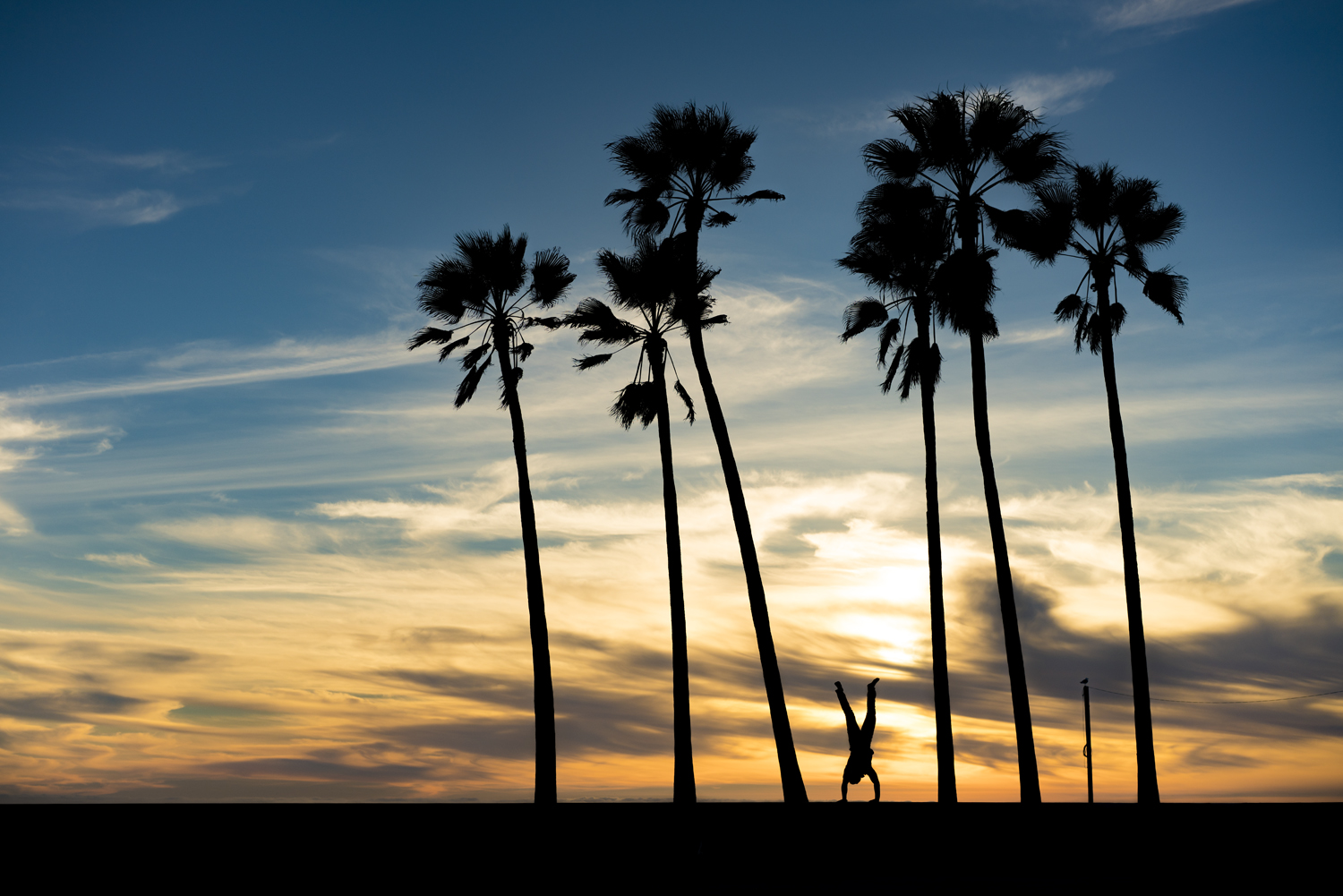 los angeles venice beach sunset palm trees silhouette austin paz adam caroselli