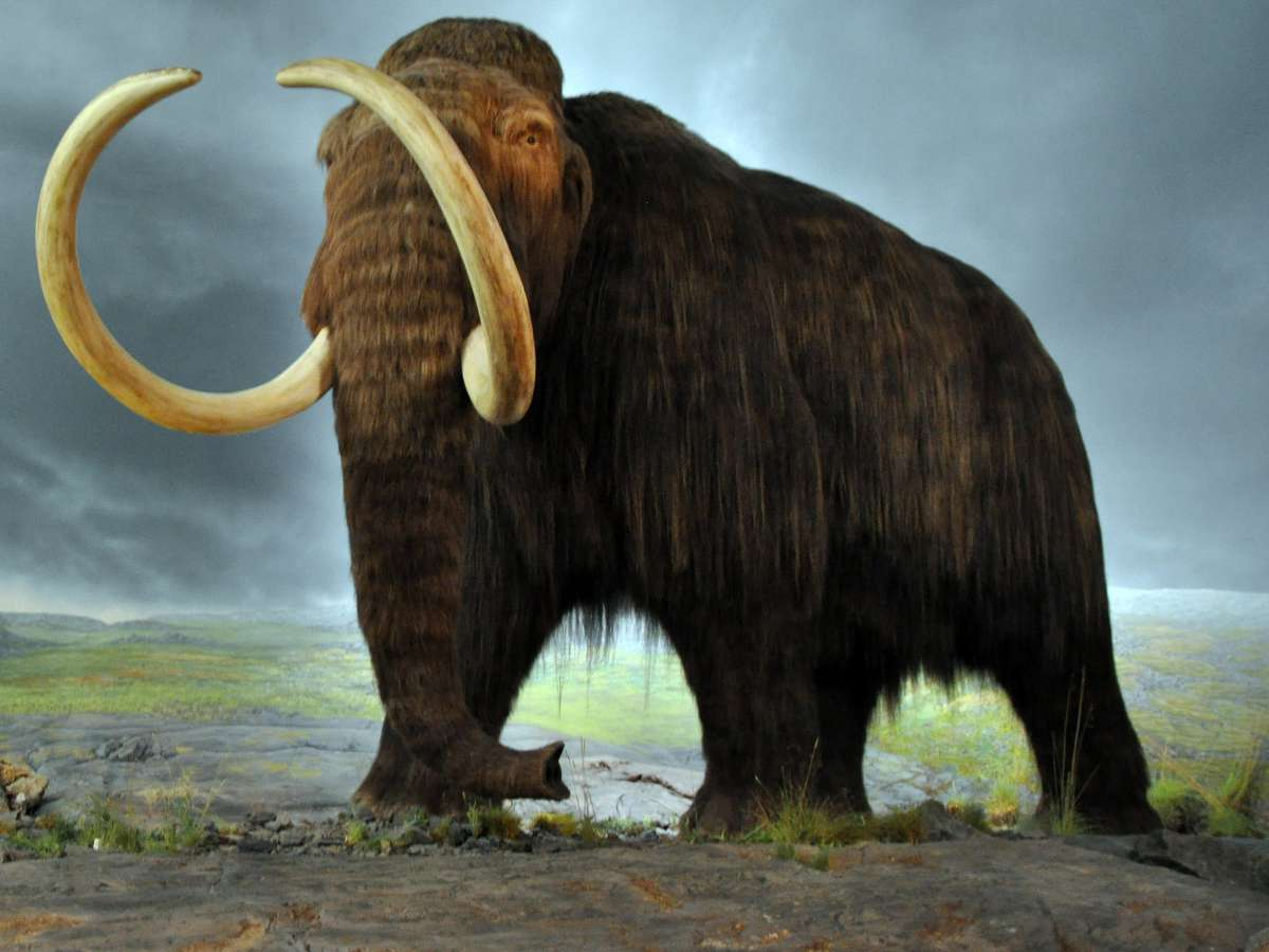woolly_mammoth_bfi.jpg