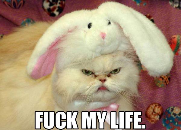 fuck-my-life-cat.jpg