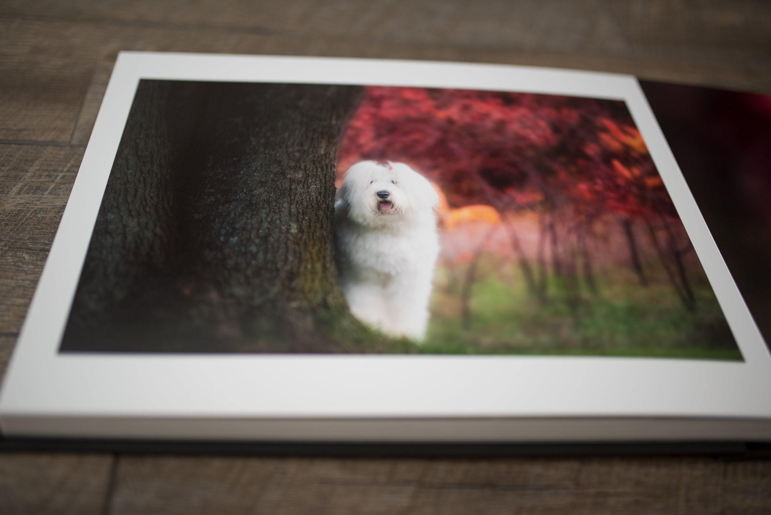Dog photographer Ottawa - Ottawa pet photographer - Salt Photography Ottawa.jpg