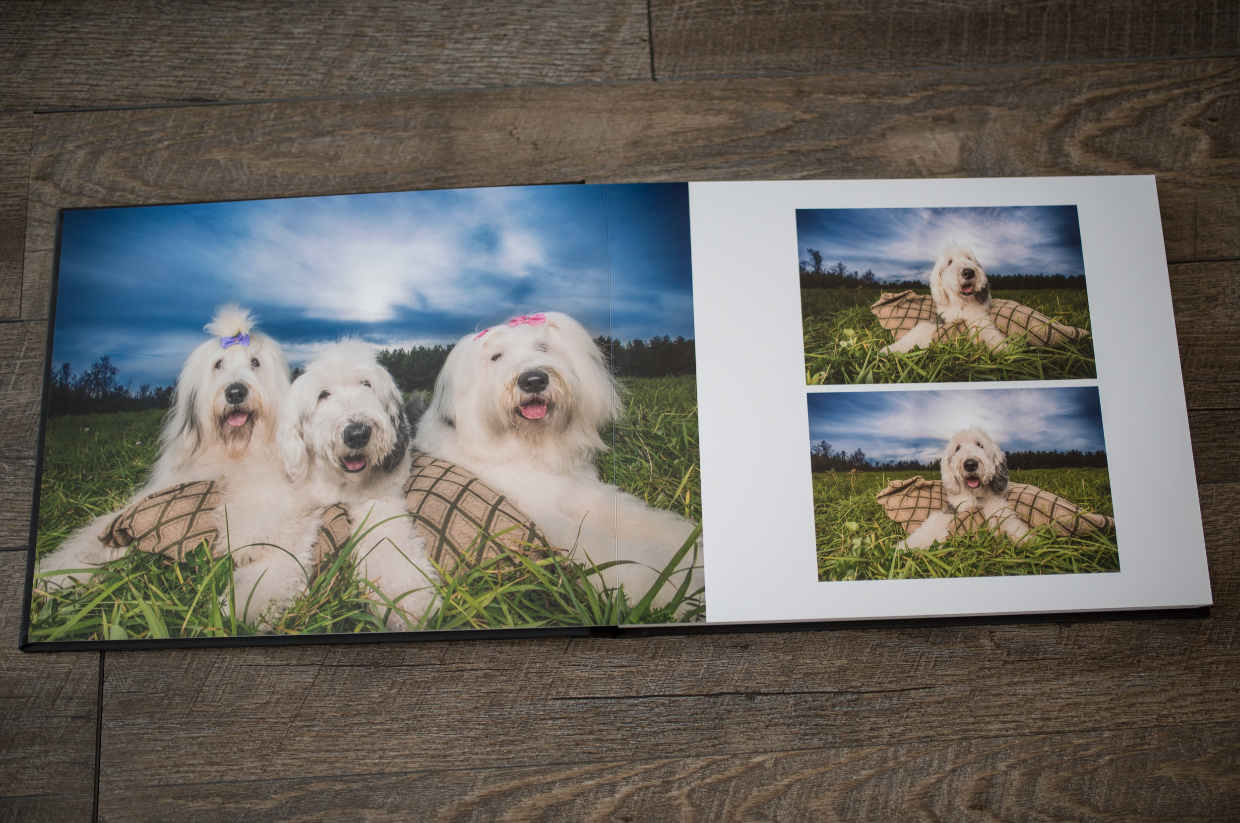 Ottawa dog photogrpaher - Pet Photographer Ottawa - Salt Photography Ottawa.jpg