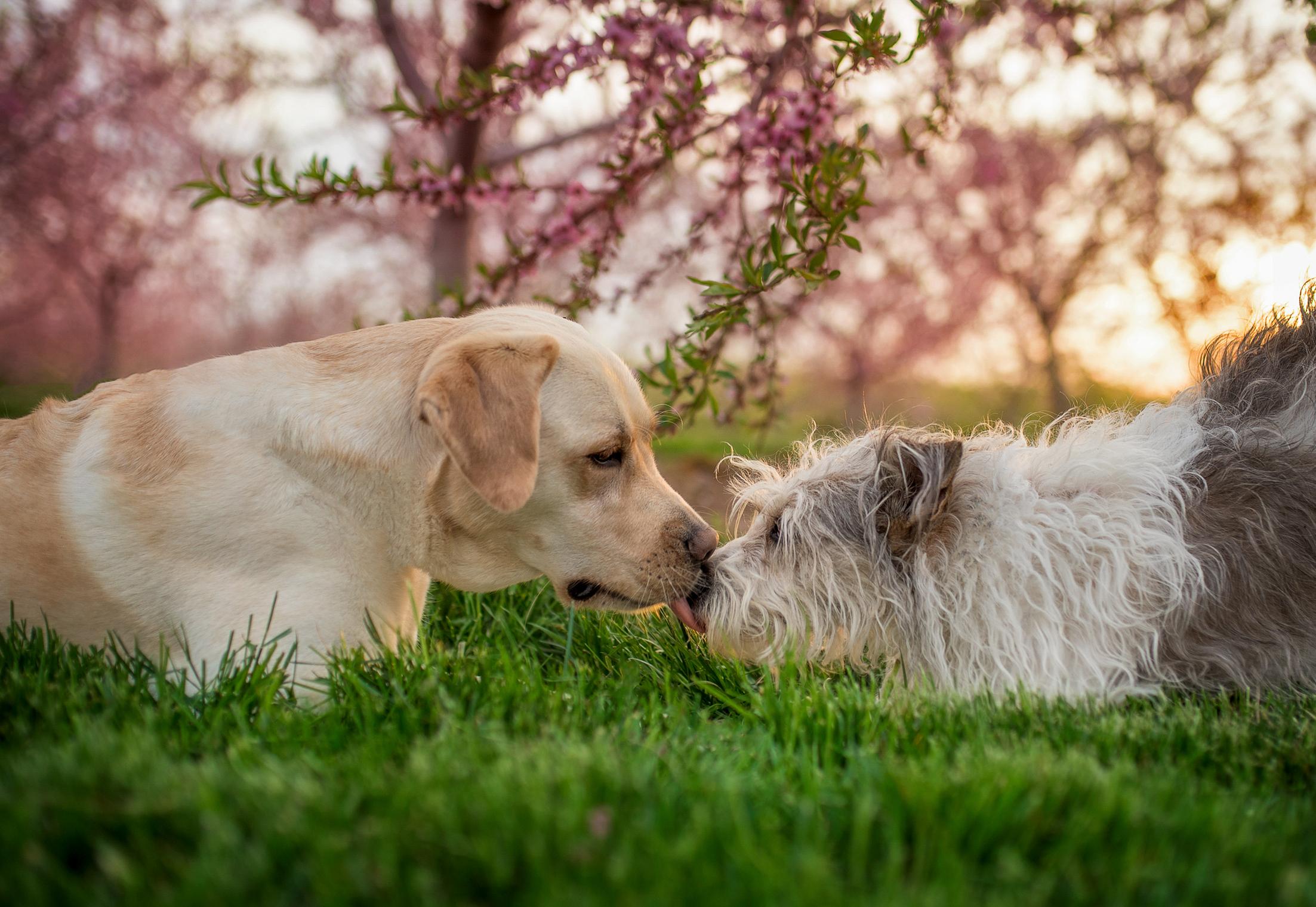 Ottawa dog photographer - Salt Photography - Ottawa Photographer -  Pet Photographer Ottawa.jpg