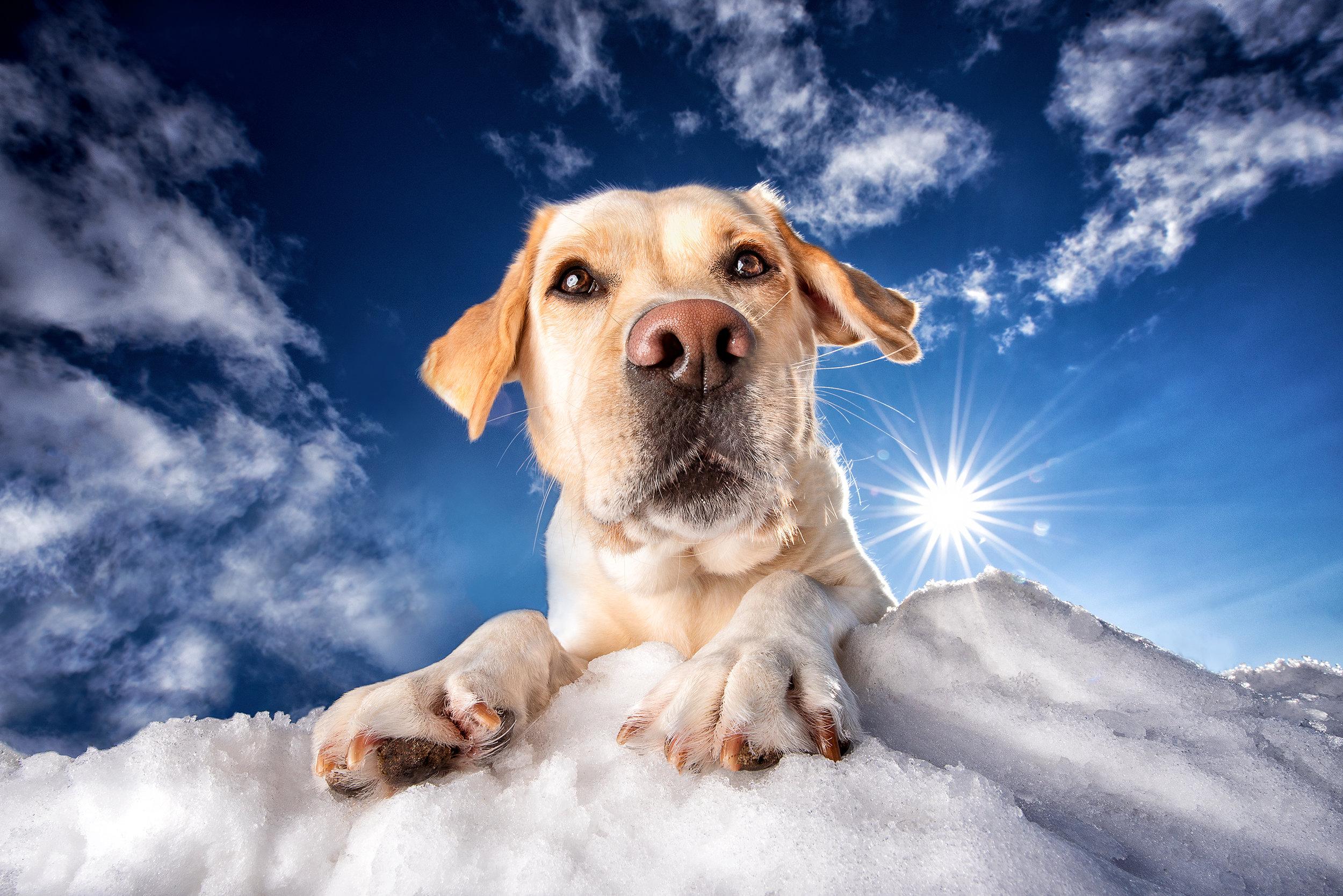 Salt Photography - Ottawa pet photographer - Dog Photographer Ottawa - Pet Photographer Ottawa - Ottawa photographer - Animal Photographer Ottawa.jpg