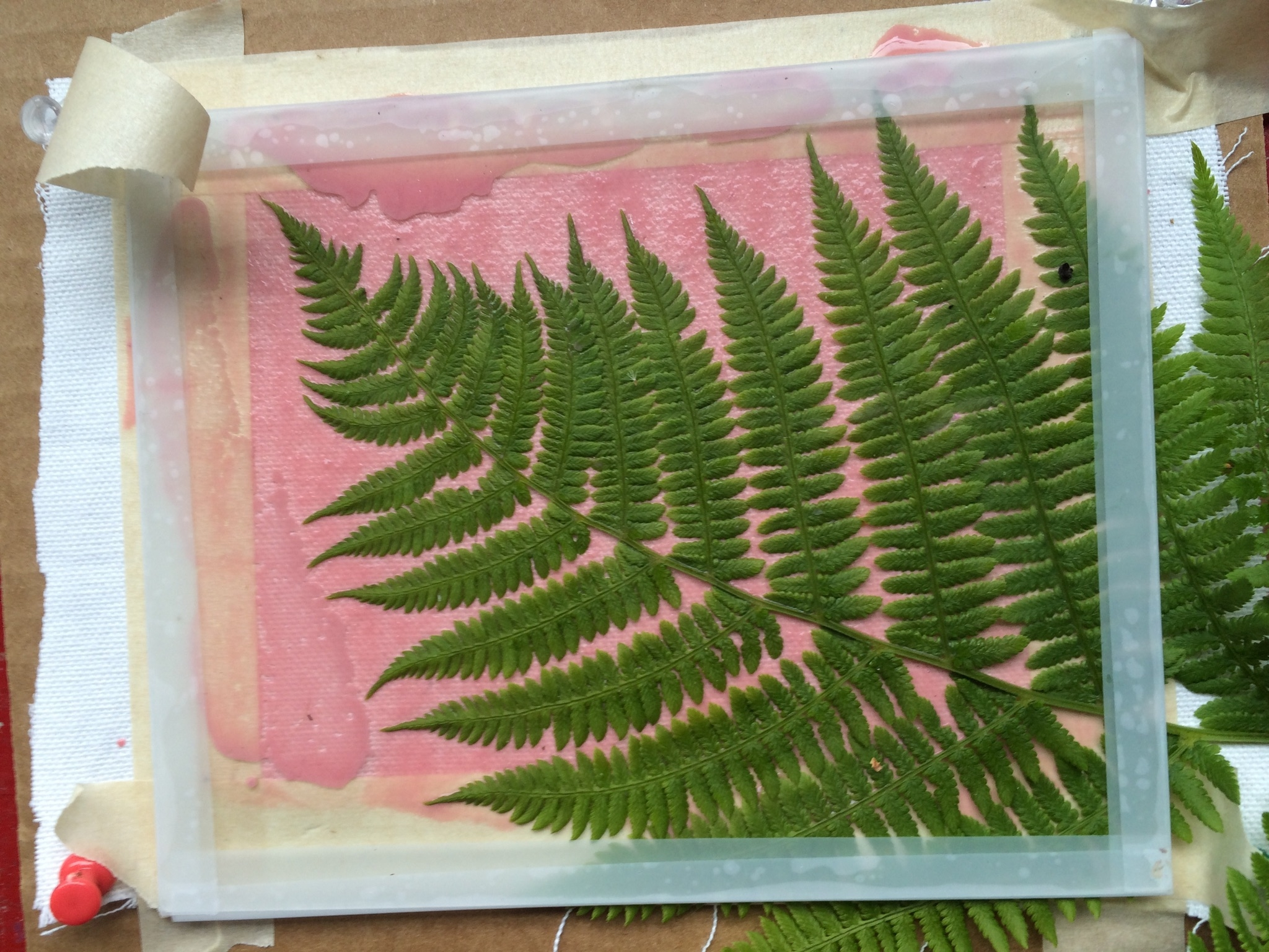 Making a photogram with a fern