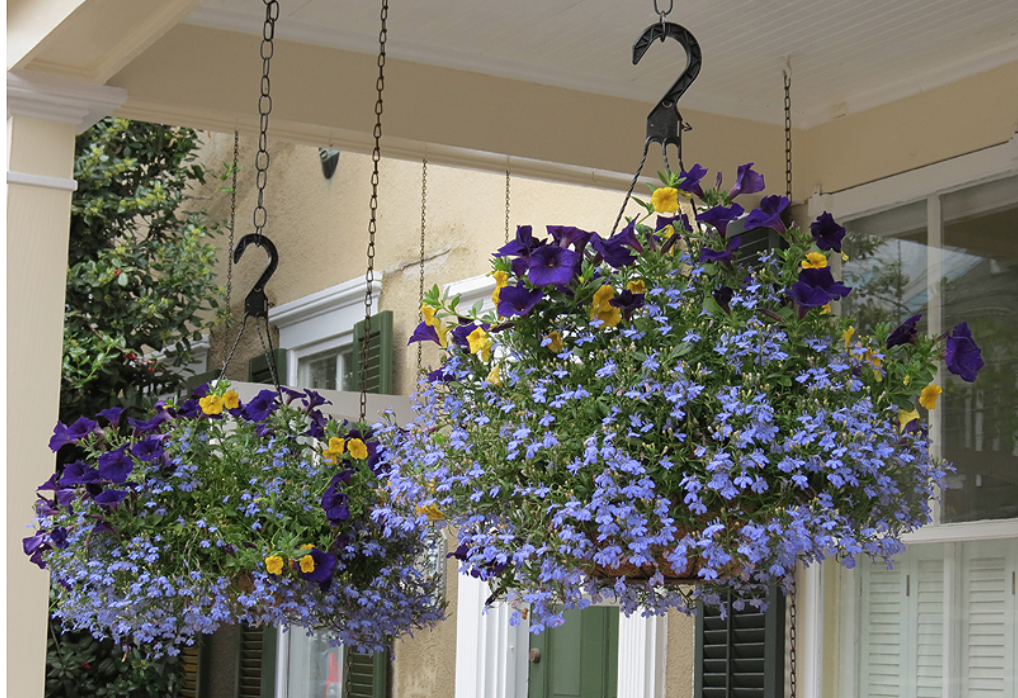 Botanical Inspirations - Your porch will be the talk of the town this spring and summer when you add these 5 stunning hanging floral baskets! Installed by the pros, you'll receive five hanging baskets, hung at your convenience. You can have all five hung at the start of the summer season, or choose a couple to start the summer and a couple more midway through the season - it's up to you!