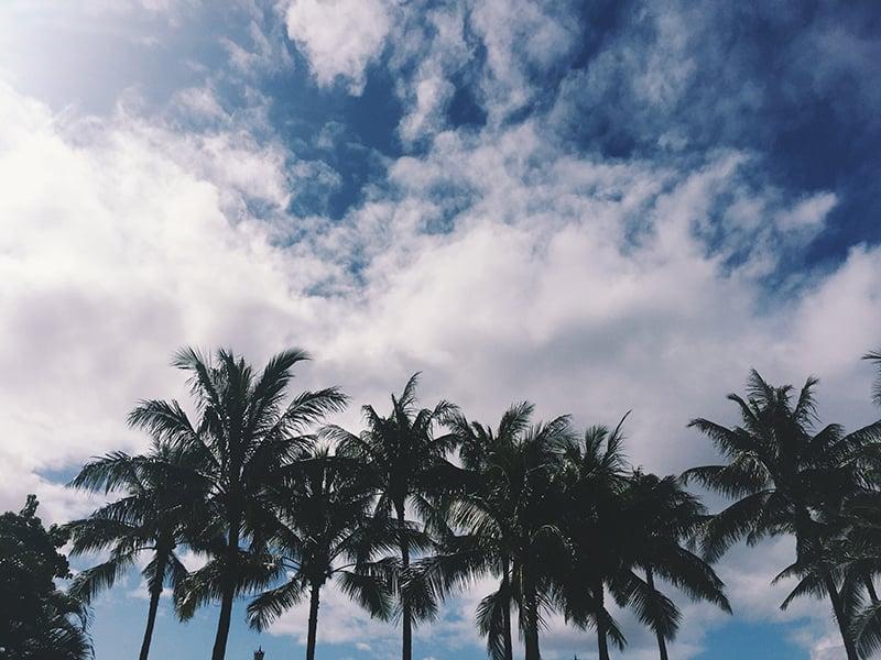 tjmousetis-hawaii-30.jpg