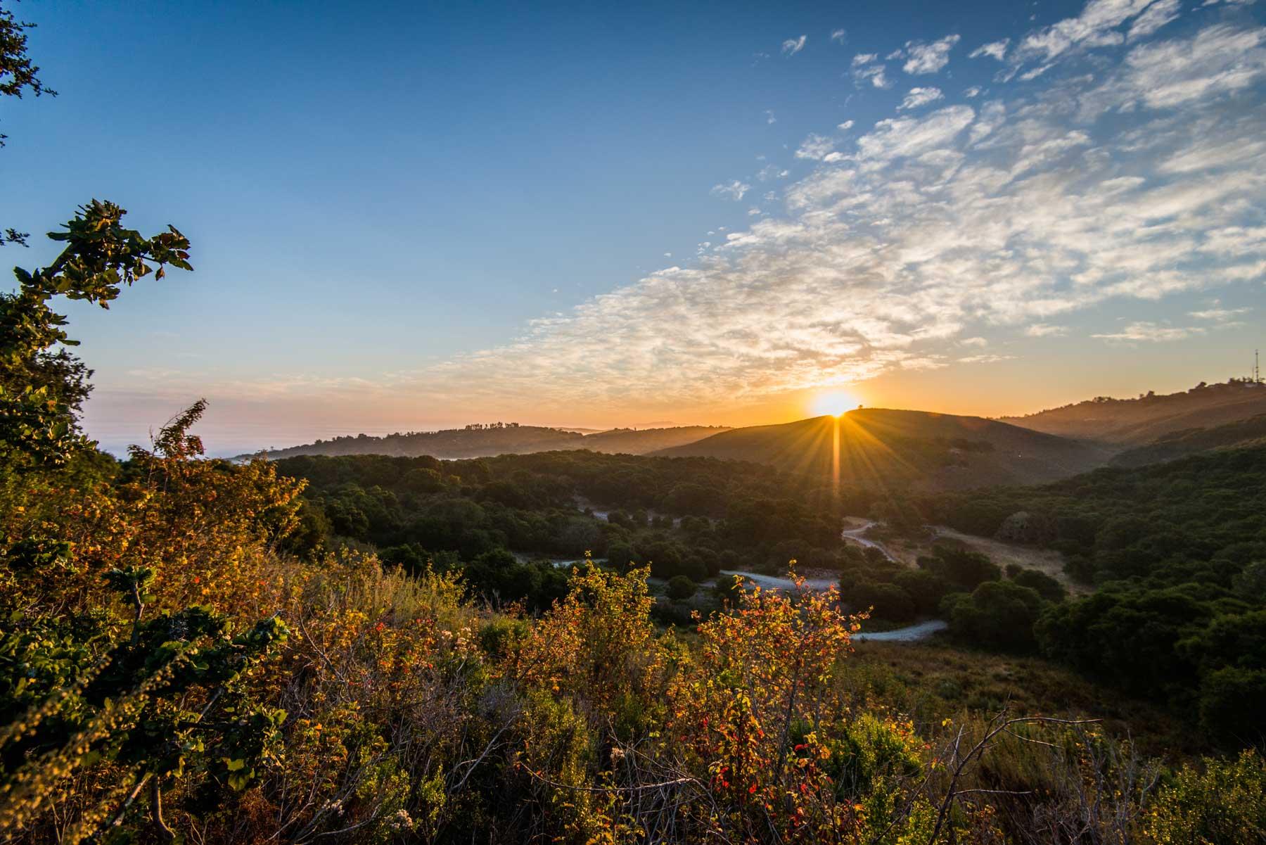SunriseStanfordTree.jpg
